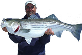 Richie Gaines from Anglers Connection Guide Service with a Monster Striped Bass caught on the Susquehanna Flats testing a Lateral Line Fishing Shirt