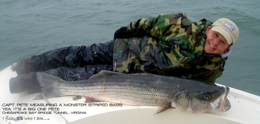 Capt pete daulberg of four seasons guide service striped for Striper fishing chesapeake bay