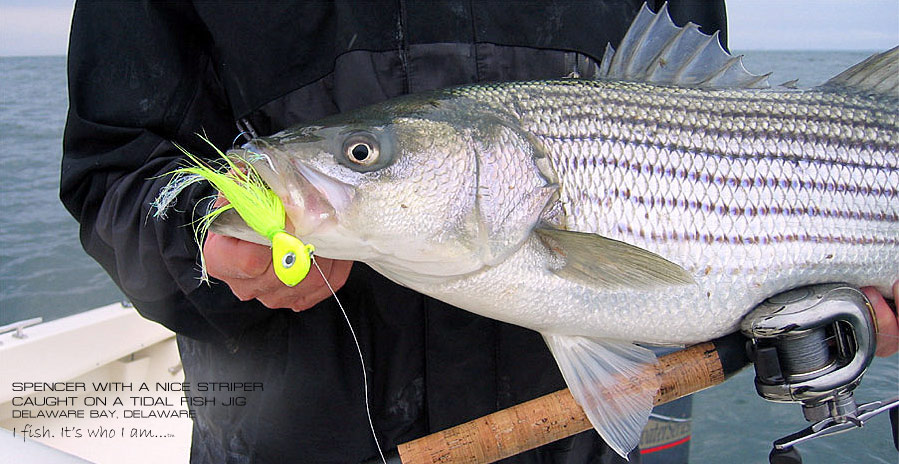Striped Bass caught by Spencer White of Lateral Line Fishing Clothing Company