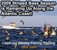 Fly Fishing Saltwater Fishing Reports,Chesapeake Bay Fishing Reports, Striped Bass Fishing Reports, Fishing Journal
